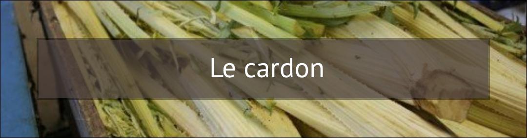 Le cardon